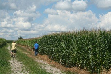 Wyandot Co corn