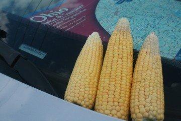 Marion Co corn