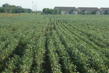 Franklin Co soybeans