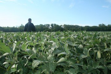 Union County soybeans