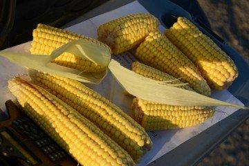 Mercer Co. corn