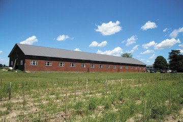 The farm market barn is the longest building at Pickwick, nearing 200 feet in length. All three of the steel framed, brick barns are receiving a facelift with new windows, roofs and floors.