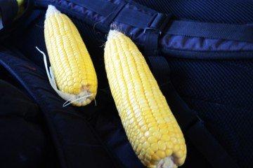 Warren Co. corn