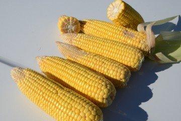 Wood Co. corn