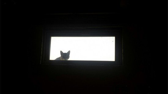 feral cats3