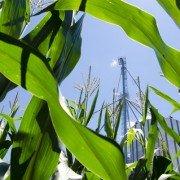 grain bin corn