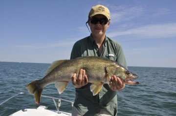 The best walleye hatch since 2003 was documented by fisheries biologists on Lake Erie this season, which is good news for anglers.