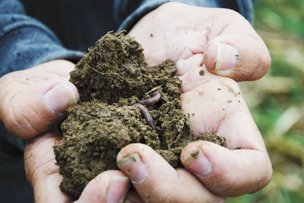 soil and worm
