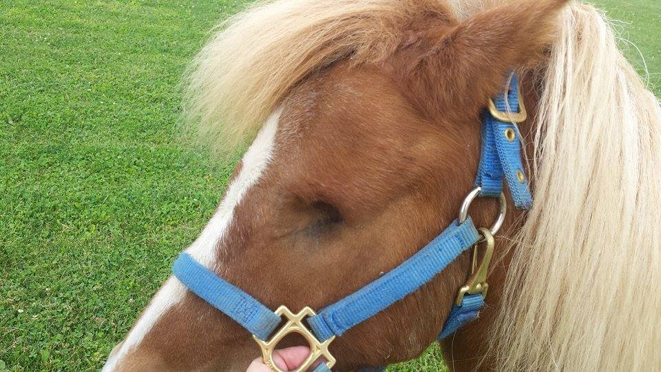 Healed from the surgery to remove his eye, Fireball has regained his health and his fun loving attitude.