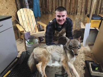 Highland senior Ryan Minyo has taken up trapping for his FFA SAE. Here he is holding the first coyote he trapped.