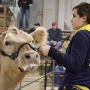 Taylor Elliot, Richland Co., watches the judge with her MaineTainer heifer.