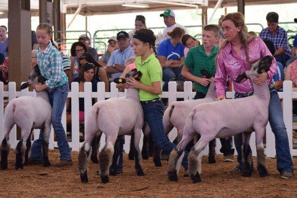 Junior exhibitors in the Hampshire market lamb class