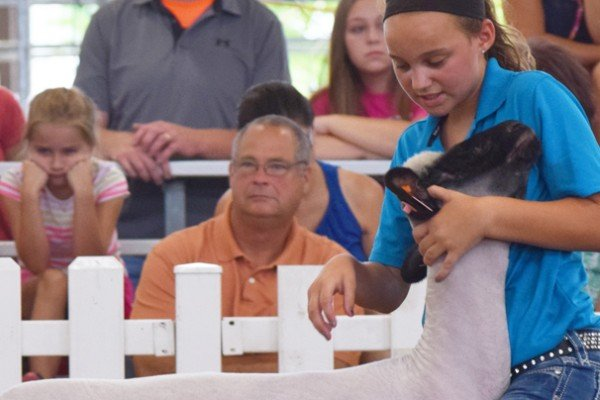 Elizabeth Shatto, 12, Shelby Co. sets up with her market lamb
