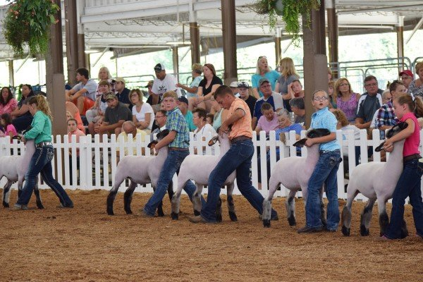 Junior market lamb exhibitors
