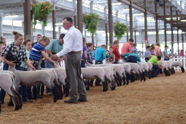Junior exhibitors are show ready for the Grade market lamb show