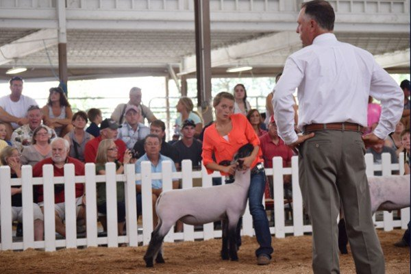 Brylee Harder, 18, Galia Co. watches the judge with her Grade market lamb