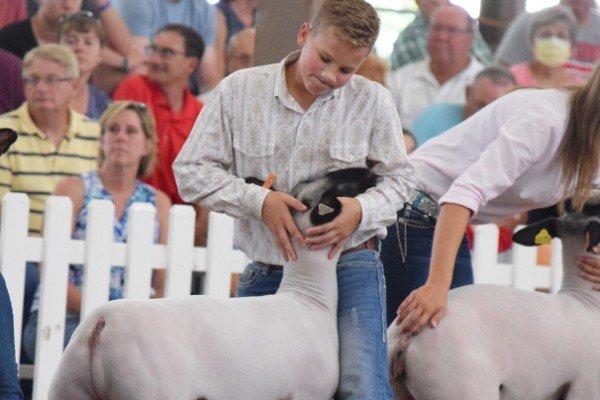 Owen Brinker, 12, Wood Co. sets his Grade lamb for judging at the market lamb show