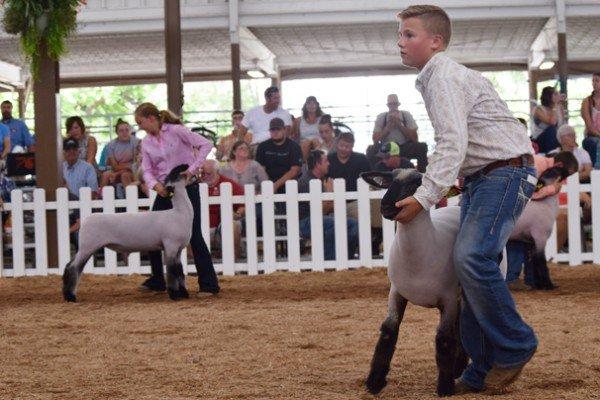 Owen Brinker, 12, Wood Co. walks with his Grade lamb in the market lamb show
