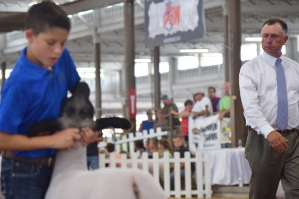 Caleb Stone sets up his Grade market lamb for the judge