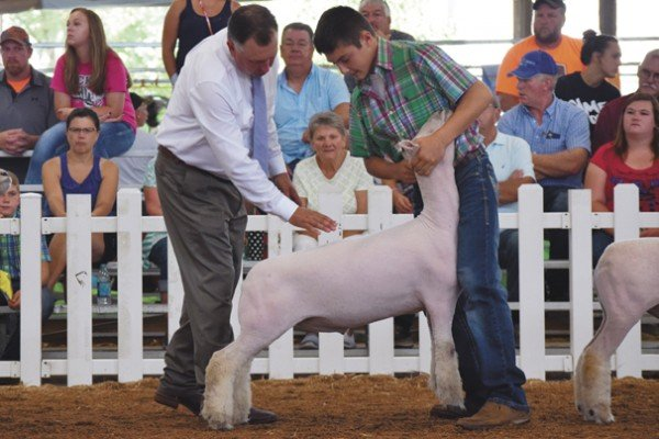 Justin Howell, 12, Knox Co. with his Southdown