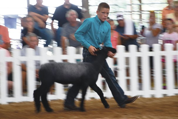 Drew Helmke, 13, HEnry Co., leads his Natural Color lamb