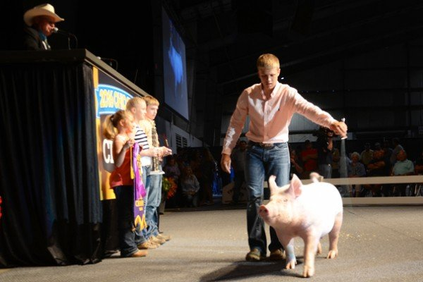The Grand Champion Barrow in 2016 was exhibited by Ashton Frey of Wyandot County, and sold to Bob Evans Farms, Ohio Farm Bureau, Event Marketing Strategies, Huffman's Market, Amusements of America for $36,000.