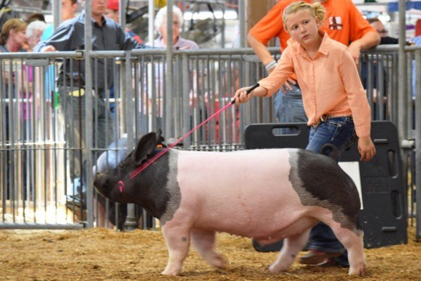 Cassidy Lusk, 10, Clark Co. with her dark crossbred market barrow
