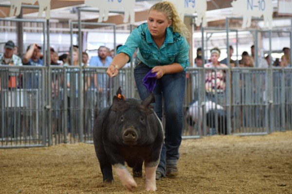 Diana Weimer, Waterville with her Grand Champion dark crossbred market barrow