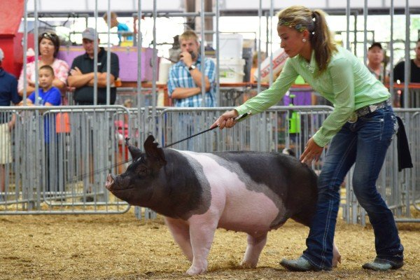 Madelyn Fearon, Greenville drives her Reserve Champion dark crossbred market barrow