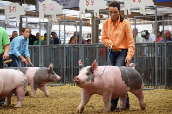 Lea Kimley, South Charleston drives her Reserve Champion light crossbred barrow