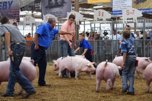 Landrace exhibitors during the purebred market barrow show