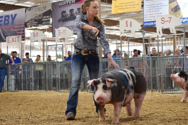 Anne Thompson, Wilmington  drives her Grand Champion Spotted market barrow