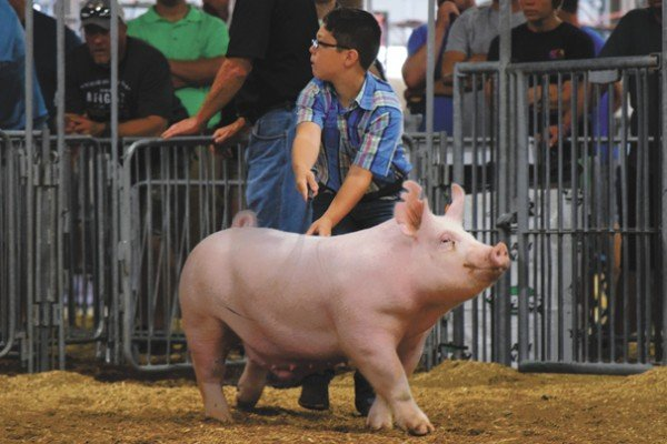 Elijah Keplinger, Clark Co. drives his Yorkshire market hog