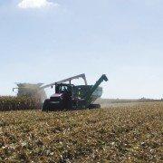 corn harvest 16