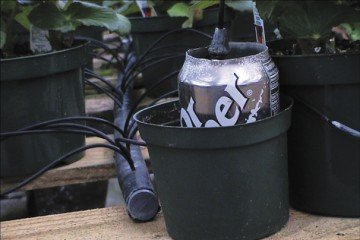 Simple tools such as empty pop cans are used to check flow rate uniformity of irrigation emitters.