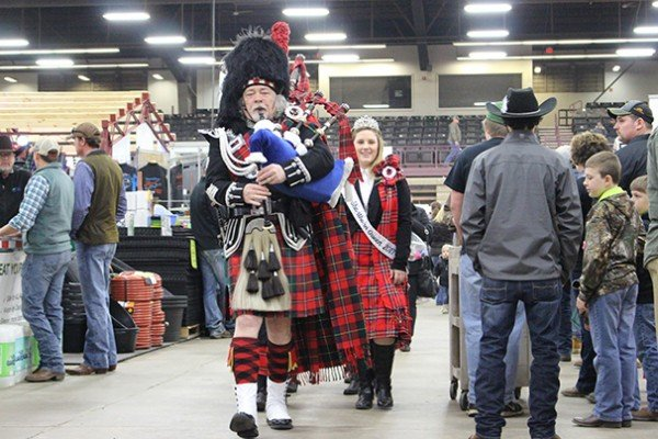 A bagpiper kicked off the shorthorn sale in memorable style with a bagpipe processional towards the show ring.