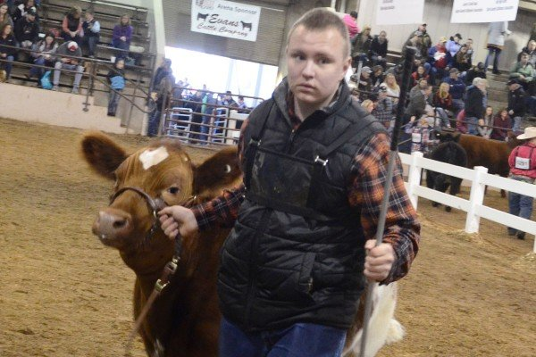 J.C. Patton from Logan County with his Shorthorn Plus