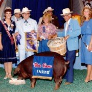 Part of 50 years of the Sale of Champions, the famous Bob Evans bushel of cash was used to buy the 1982 Grand Champion Barrow exhibited by Cheryl Laucher, who is holding the extra $1 for $13,001. Photo courtesy of the Ohio State Fair.