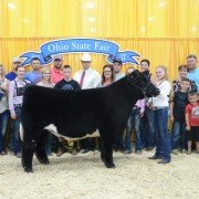 Grand Champion Junior Market Beef:   Division 3 Champion Crossbred, Addison Jones, Allen Co.
