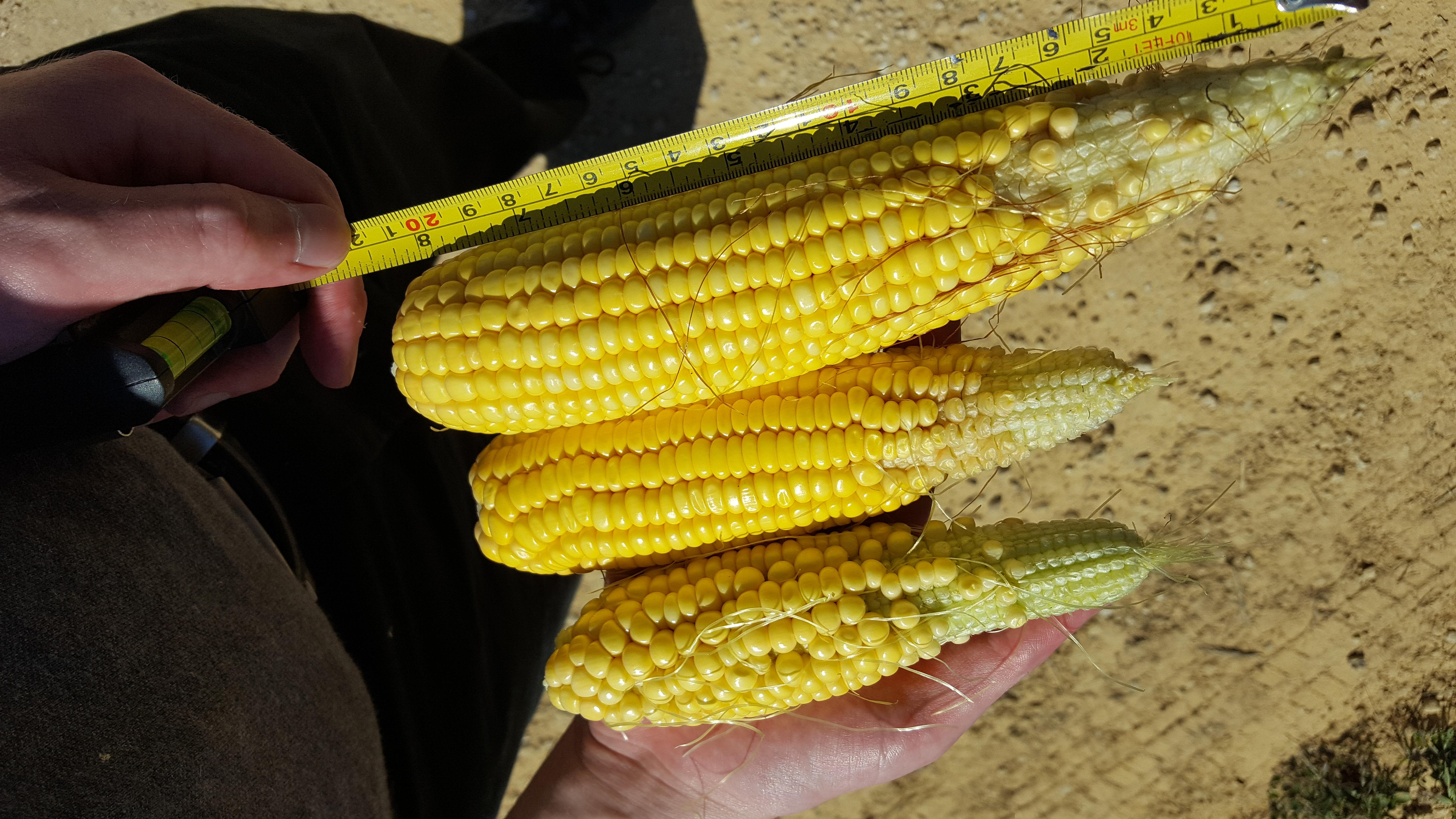 Farm Journal Yield Tour