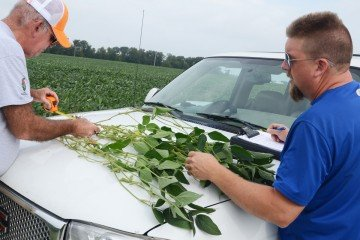 Auglaize Co. beans