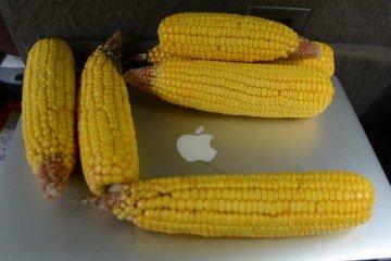 Butler Co.Corn