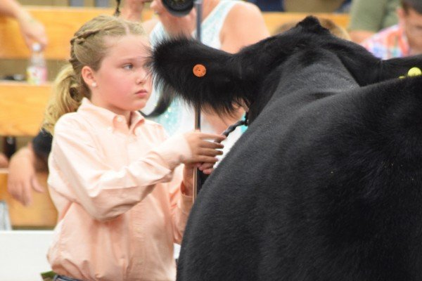 Tatumn Poff, Geauga Co., prepares to lead her animal around the ring.