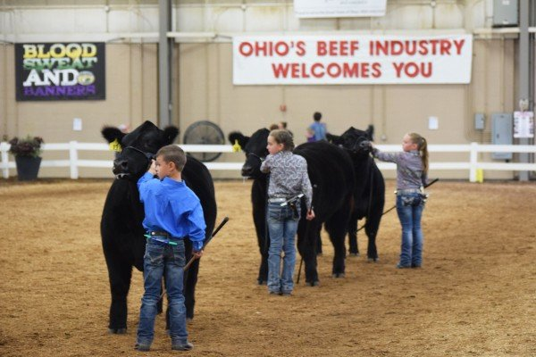 Exhibitors from the nine year old division compete during Showmanship.