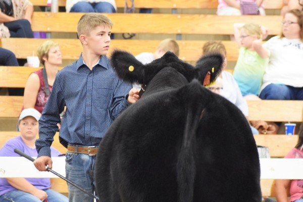 Harrison Blay, Portage Co., maintains eye contact with the judge.