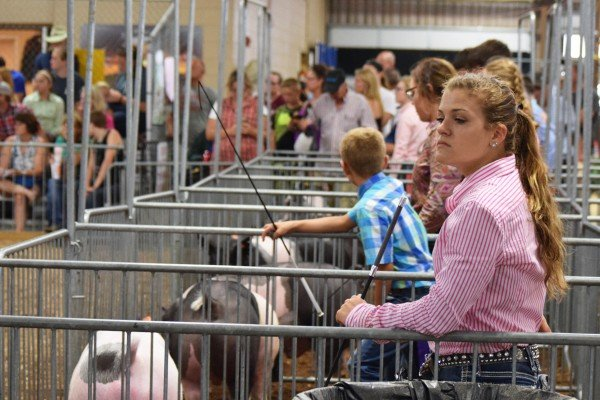 Exhibitors wait to enter the ring on Friday at the Crossbred Show.