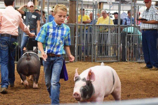 Logan Deel, Vinton, looks down at his Crossbred hog.
