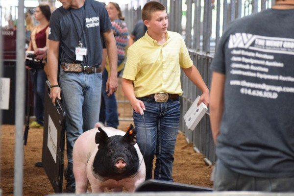 Cade Sponcil, Greenfield, leaves the ring with his Division 1 Grand Champion Dark Crossbred Barrow.