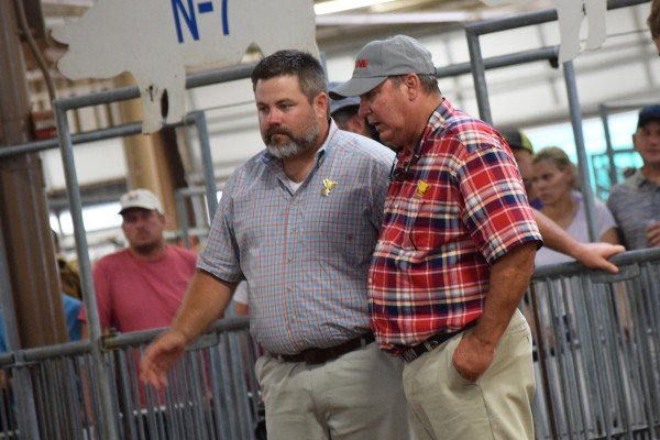 Judges compare notes before selecting Champion Dark Crossbred Barrow.
