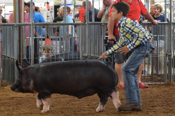 Aaron Rolfe, Sabina, is a class winner with his Berkshire Hog.